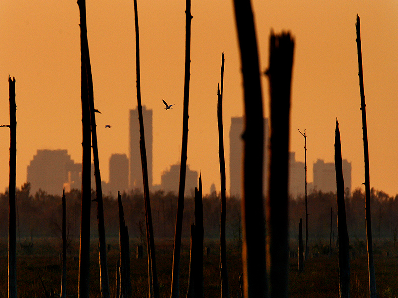 New Orleans skyline and dead cypress swamp